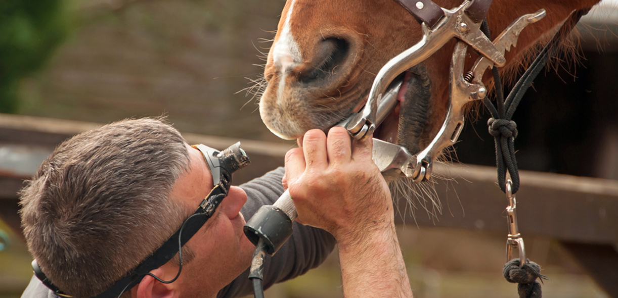 Care for your horse's mouth