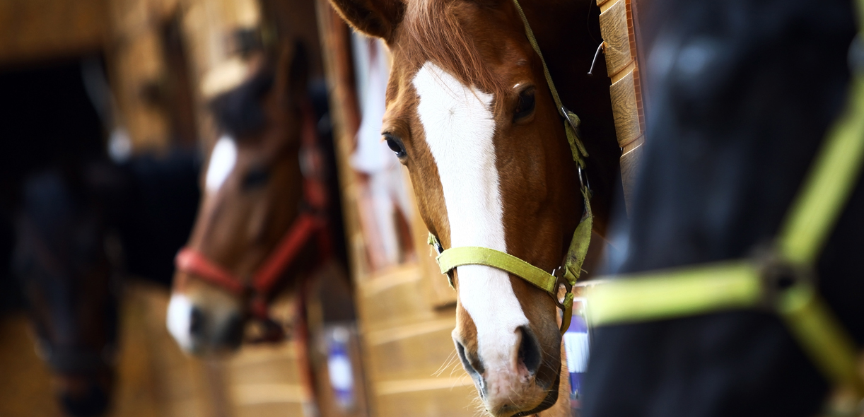 AAEP's guidelines for preventing COVID-19 in equestrian facilities