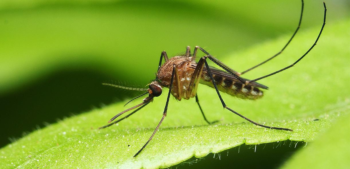 Horses and West Nile virus