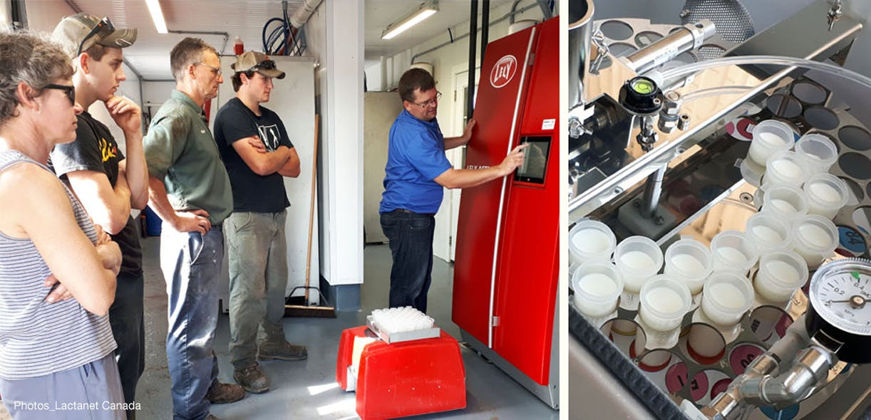 New technology helps dairy producers switch to robotic milking