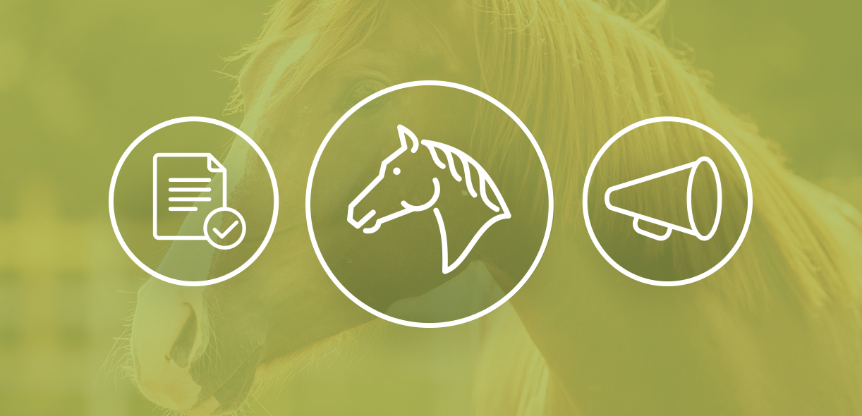 Equine Guelph's guidelines on caring for horses during COVID-19