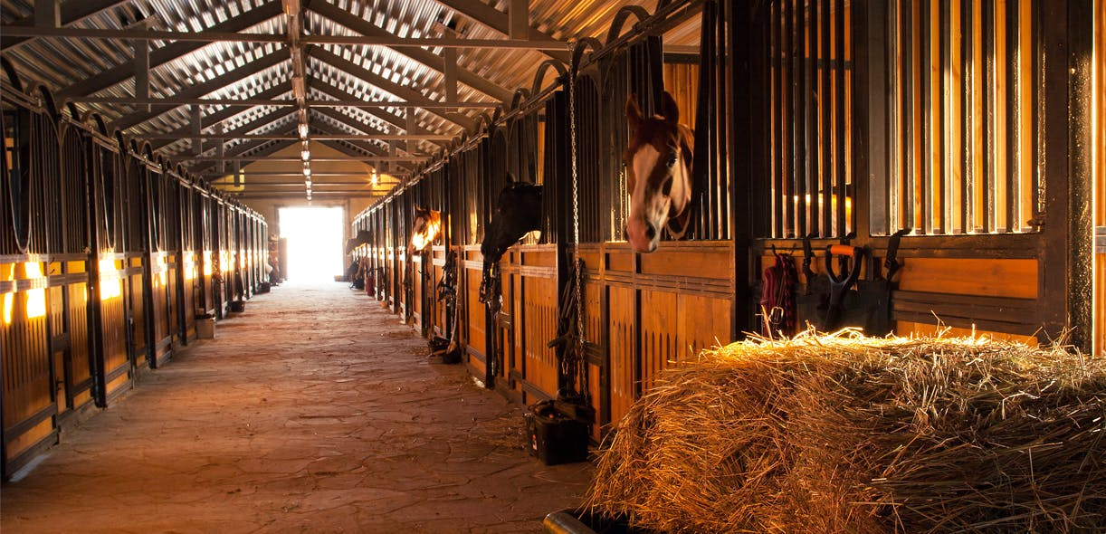 Barn fire prevention tools from Equine Guelph