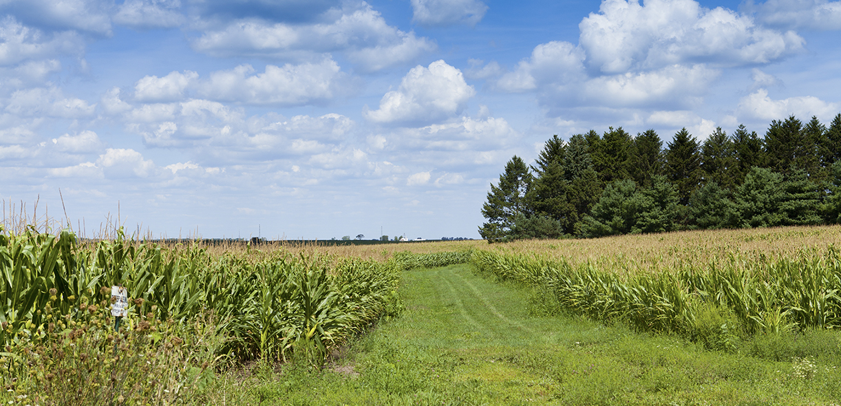 A new app provides the carbon offset value of shelterbelts