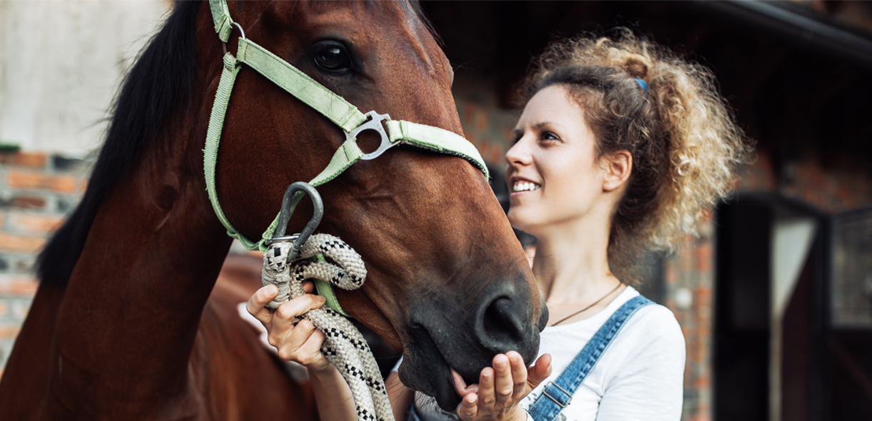 A tool to rate the risk of colic in horses