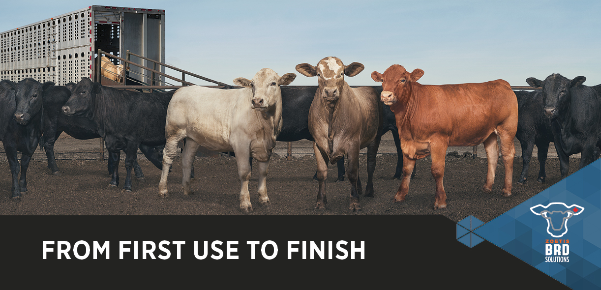 BRD Solutions: From first use to finish
