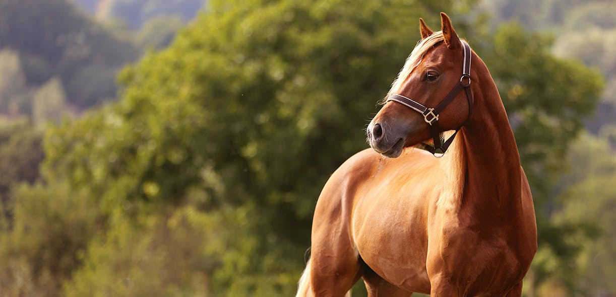 A comprehensive approach to equine weight loss