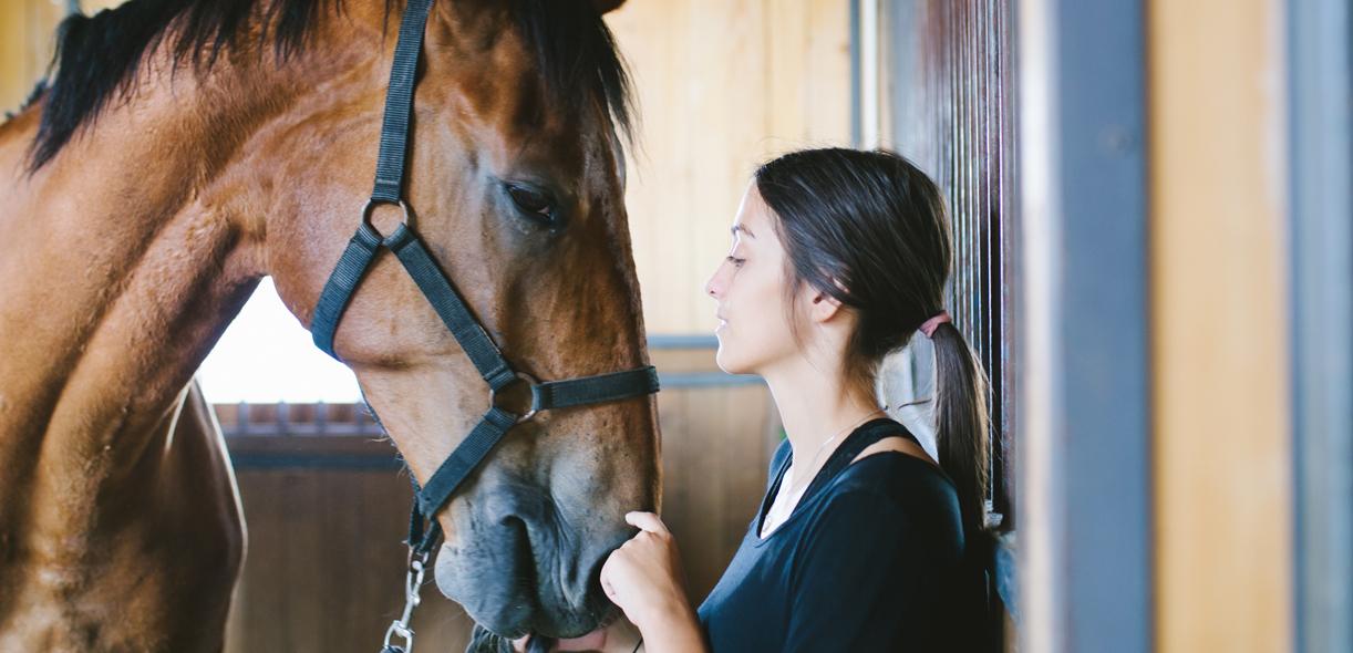 Prendre soin d'un cheval âgé